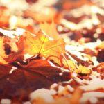 Leaves in focus